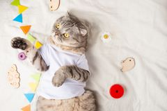 Very cute baby cat, with toys and a pacifier. In a white T-shirt, lying on his back. Kitty, funny animal.  royalty free stock photography