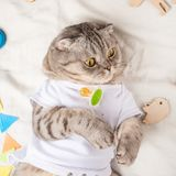 Very cute baby cat, with toys and a pacifier. In a white T-shirt, lying on his back. Kitty, funny animal.  royalty free stock images