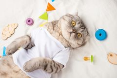 Very cute baby cat, with toys and a pacifier. In a white T-shirt, lying on his back. Kitty, funny animal.  stock images