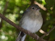Cute bird in a brach stock images