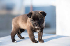 Very cute black puppies. Beautiful puppies. Stock Photography