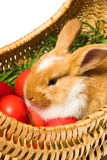 Very cute Easter bunny Royalty Free Stock Photos