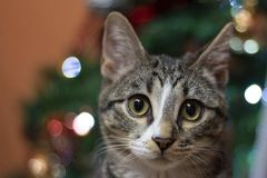 Merry Christmas from Yuki! royalty free stock image