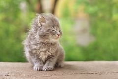 Very cute fluffy kitten. At windy day royalty free stock images