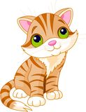 Very Cute kitten. With green eyes. Vector illustration Stock Image