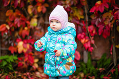 Very cute little girl in the blue jacket on the background of re Stock Images
