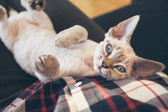 Very cute little kitten. Royalty Free Stock Photography