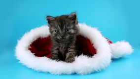 Very cute little kitten puts tenderly his paw, sitting in Santa Claus hat