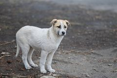 Very cute mixed breed puppy Royalty Free Stock Image
