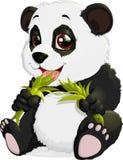 Very cute Panda eating bamboo Royalty Free Stock Photos