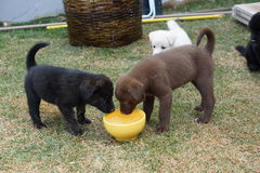 Very cute puppies. The cutest puppies in every color - brown, white, black, mixed Stock Photo