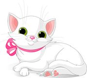 Very Cute white cat. Illustration of Very Cute white Cat with pink bow Royalty Free Stock Photography