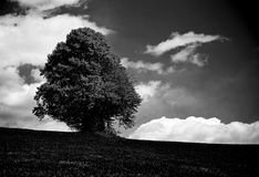 Very dark bleak landscape with isolated tree in the middle of th Stock Photo