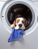 Very delicate washing Stock Images