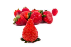 Very delicious ripe strawberries in focus with more strawberries. A group of Several ripe strawberries with one very delicate in the foreground in focus on a Stock Images