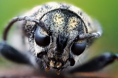 Close-up portrait of a beetle stock images
