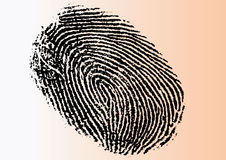 Very Detailed Vector FingerPrint. Black and White Vector Fingerprint - Very accurately scanned and traced ( Vector is transparent so it can be overlaid on other Royalty Free Stock Photography