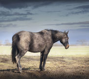 Very Dirty horse in clay crust stands on pasture over sky Royalty Free Stock Photos