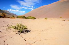 Very dry ground between hills. Low angle view onto a bush growing out of a crack in a very dry desert like ground between brown hills in Chile, South America Royalty Free Stock Images