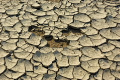 Very dry land Stock Photography