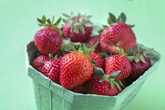 Strawberry cultivar Flair royalty free stock image