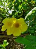 Very exotic yellow flowers stock photo