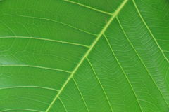 Very extreme close up of green leave. Stock Images