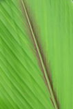 Very extreme close up of green leave. Stock Photos