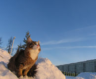 Very fluffy cat in the cold. Royalty Free Stock Photography