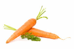 Very fresh carrots Stock Photography
