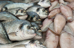 Fresh fish at a fish market Royalty Free Stock Photo