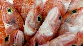 Very fresh fish in the market stock images