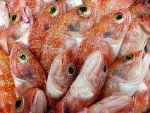 Very fresh fish in the market stock photo