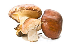 Very fresh mushrooms Royalty Free Stock Photos
