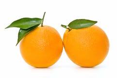 Very fresh oranges. Isolated on white background royalty free stock photo