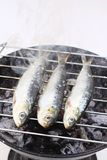 Very fresh sardines being grilled on charcoal Stock Images