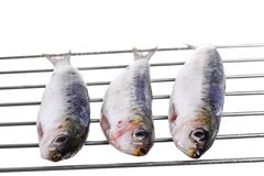 Very fresh sardines on a grill isolated royalty free stock images