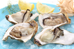 Very fresh steamed oysters with lemon juice. On a blue dish Royalty Free Stock Images