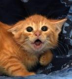 very frightened little ginger kitten stock photos