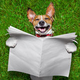 Very funny dog. Super funny face dog lying on back on green grass reading blank newspaper Stock Photo