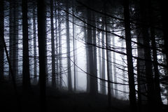 Very gloomy dark forest Royalty Free Stock Photo
