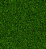 Very green grass Royalty Free Stock Images