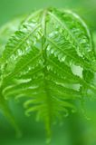 Very Green Leaf Stock Photography