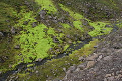Very green moss on rocks. Nice green moss between the gray rocks Royalty Free Stock Photo