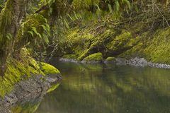 Very Green Smooth Stream and Forest Royalty Free Stock Photography