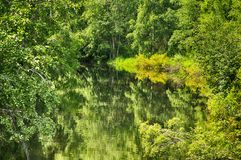 Very green wood which is reflected in water Royalty Free Stock Photography