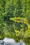 Very green wood which is reflected in water Stock Images