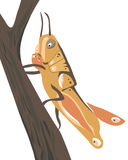 Very Handsome Hopper Stock Photography