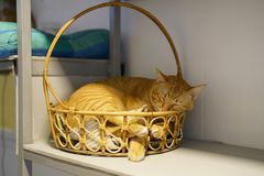 Very happy cat sleeping in the basket stock photo
