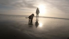Dog sitting down following owner command on the beach